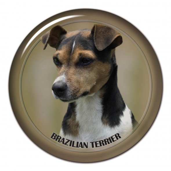 Brazillian Terrier