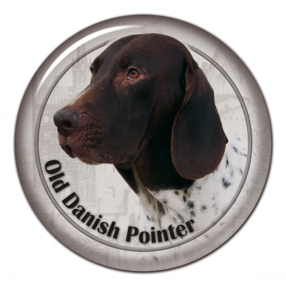 Old Danish Pointing Dog
