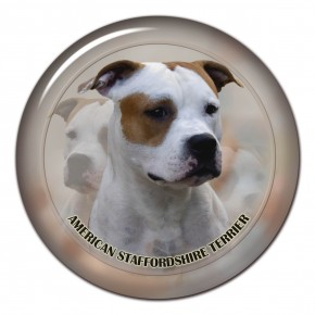 American Staffordshire Terrier 101 C
