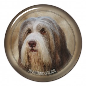 Bearded Collie 101 C
