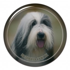 Bearded Collie 102 C