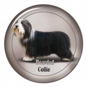 Bearded Collie 103 C