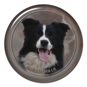 Border Collie 102 C