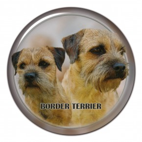 Border Terrier 102 C