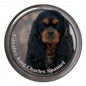 Cavalier King Charles Spaniel 103 C