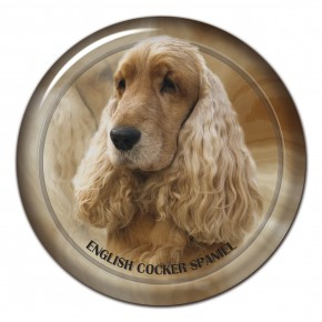 English Cocker Spaniel 102 C
