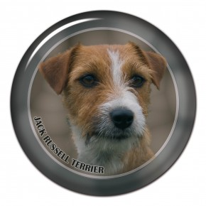 Jack Russell Terrier 102 C