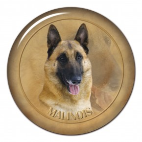 Malinois 102 C