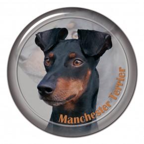 Manchester Terrier 101 C