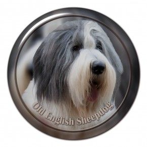 Old English Sheepdog 101 C