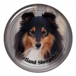 Shetland Sheepdog 102 C