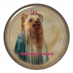 Yorkshire Terrier 101 C