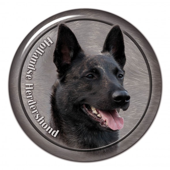 Dutch Shepherd Dog