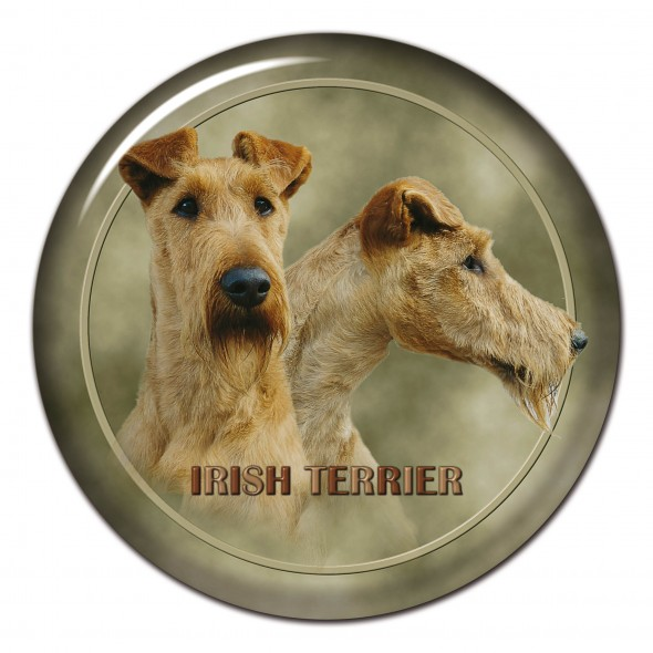 Irish Terrier 139