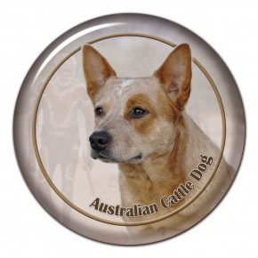 Australian Cattle Dog 102 C