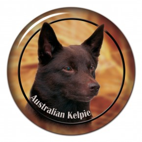 Australian Kelpie 102 C