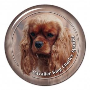 Cavalier King Charles Spaniel 104 C