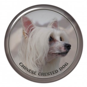 Chinese Crested Dog 101 C