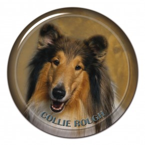 Collie Rough 101 C