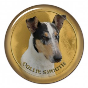 Collie Smooth 101 C