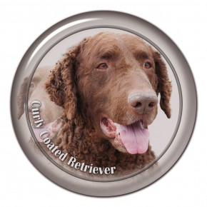 Curly Coated Retriever 101 C