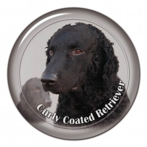 Curly Coated Retriever 102 C