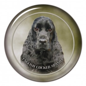 English Cocker Spaniel 101 C