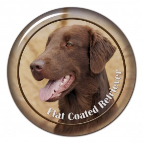Flat Coated Retriever 102 C