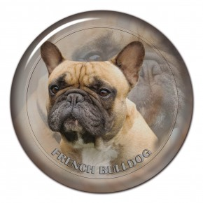 French Bulldog 101 C