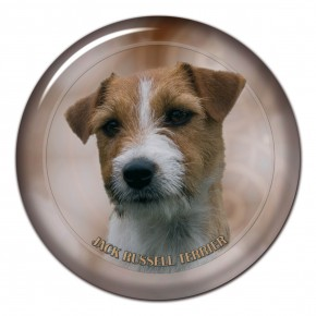 Jack Russell Terrier 101 C
