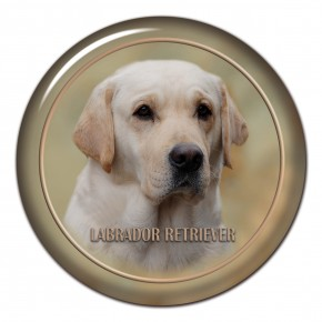 Labrador Retriever 101 C