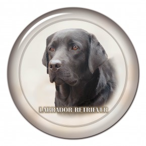 Labrador Retriever 103 C