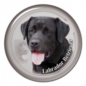 Labrador Retriever 104 C