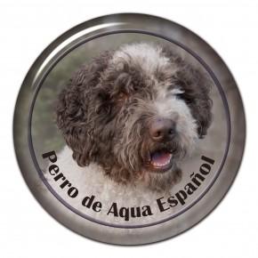 Perro De Aqua Espanol 101 C