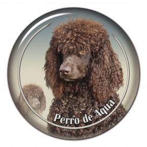 Perro De Aqua Espanol 102 C