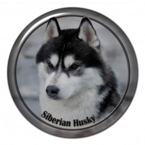 Siberian Husky 101 C