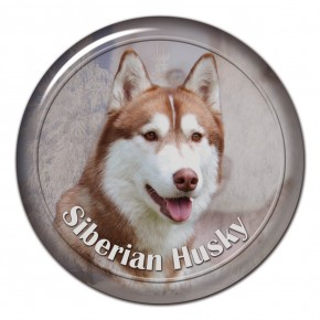 Siberian Husky 102 C
