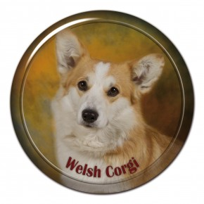 Welsh Corgi 101 C