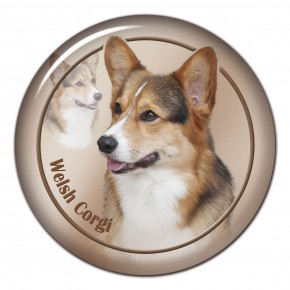 Welsh Corgi 102 C