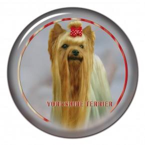 Yorkshire Terrier 102 C