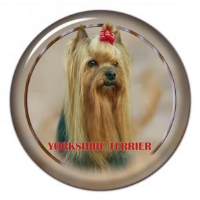 Yorkshire Terrier 103 C