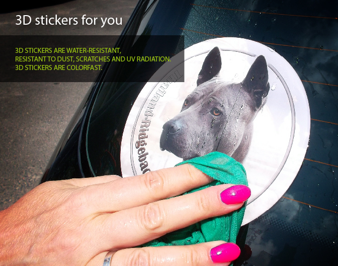 3D car stickers with your dog